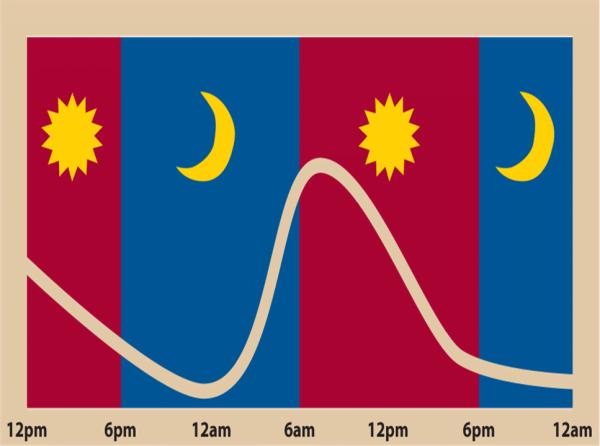 circadian cortisol rhythm