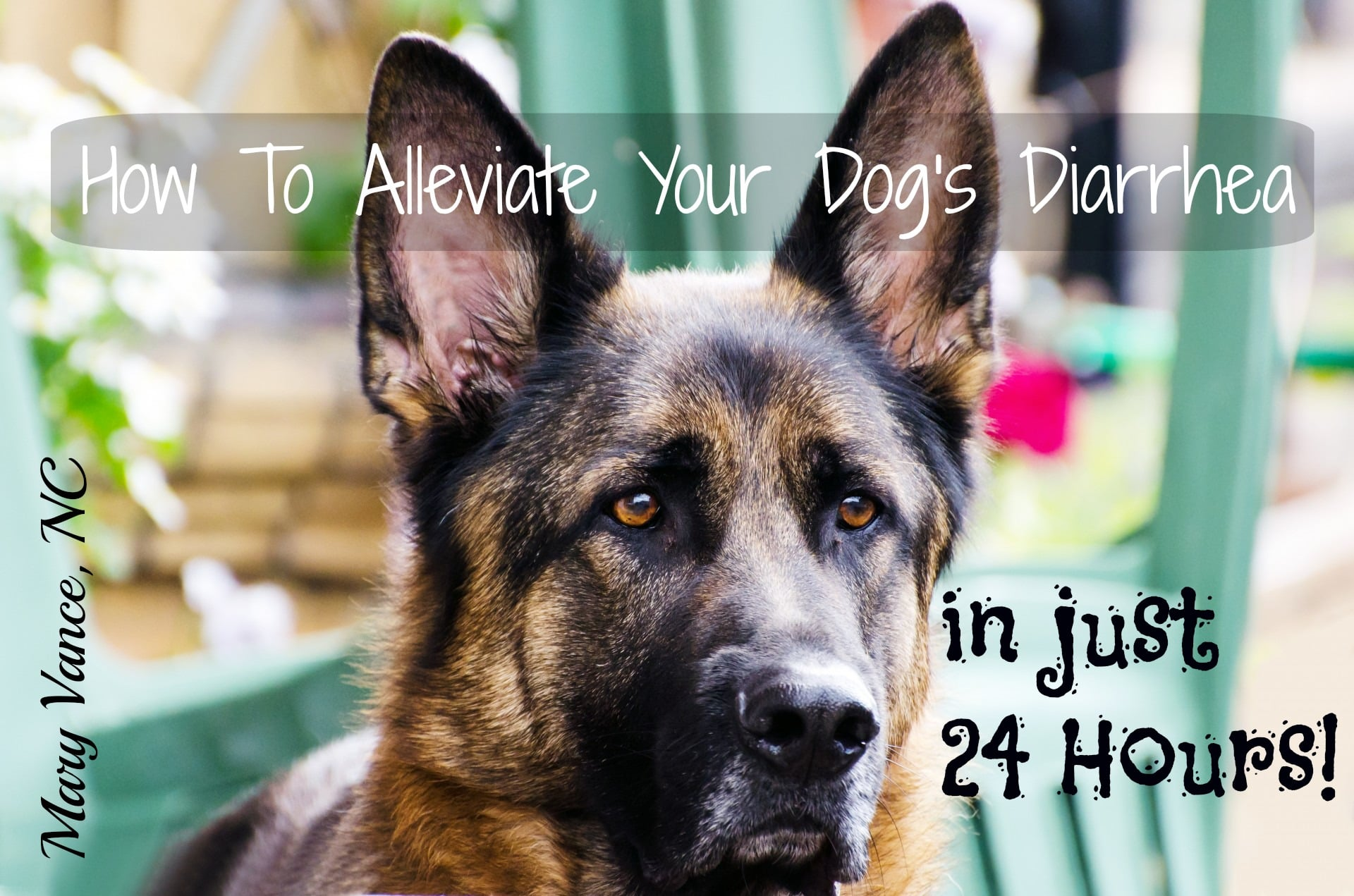 How to Alleviate Your Dog's Diarrhea in