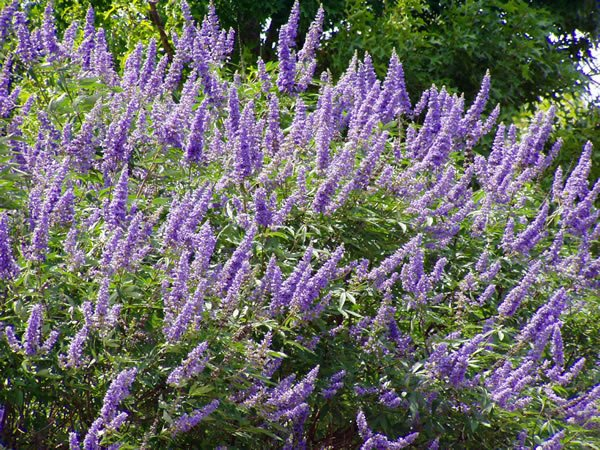 Can I Take Metformin With Vitex