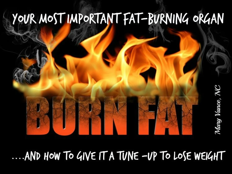 Your Most Important Fat Burning Organ (and How to Maximize its Function to Lose Weight)