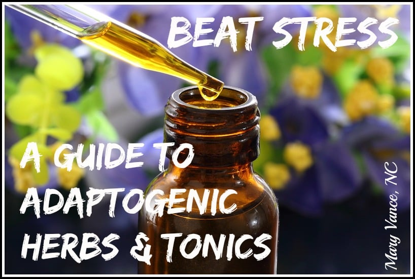 Beat Stress: A Guide to Adaptogenic Herbs