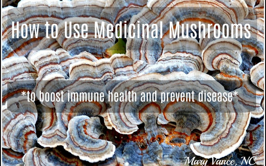 A Guide to Medicinal Mushrooms