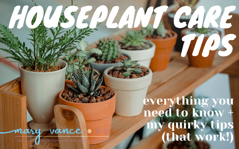 Houseplant Care Tips You Won't Find Elsewhere